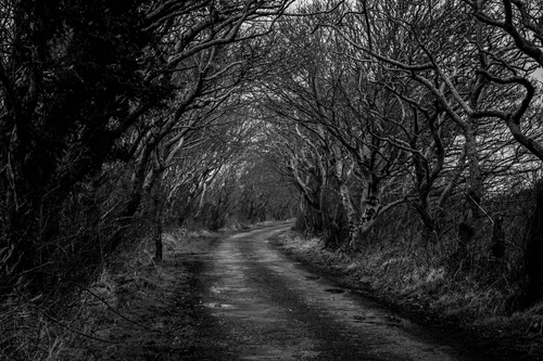 The road to Binnion Bay, Clonmany, framed with trees that meet in the middle. Inishowen's very own Dark Hedges!