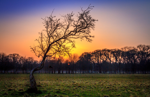 Sunset at Phoenix park