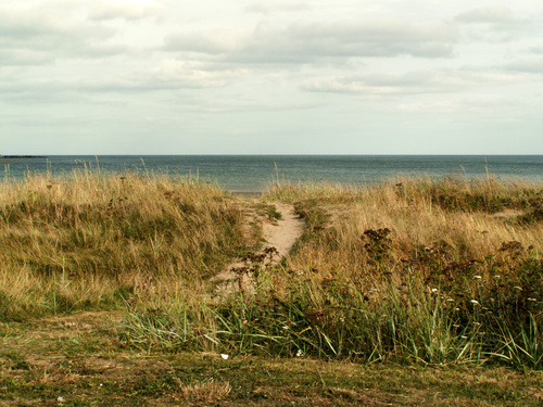 A view of the beach and natural shoreline landscape in Howth