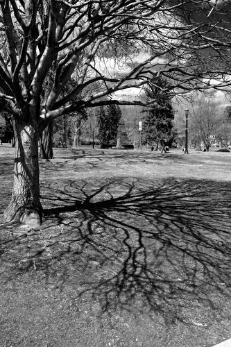 Niagara trees grow as no one watches