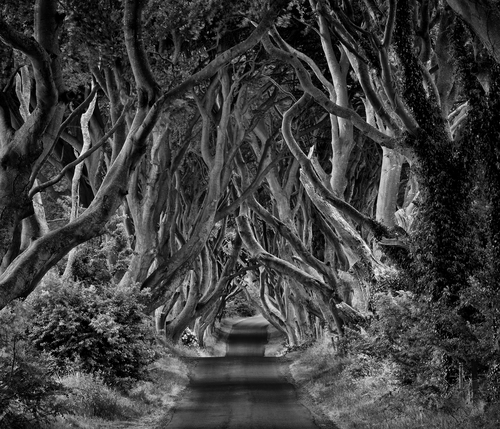 This avenue of beech trees known as the Dark Hedges in Co Antrim, line the Bregagh Road not far from the village of Armoy.