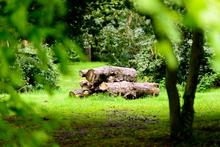Mini_140511-182414-walled_garden