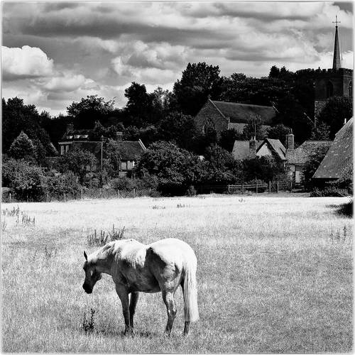 horse in front of a village