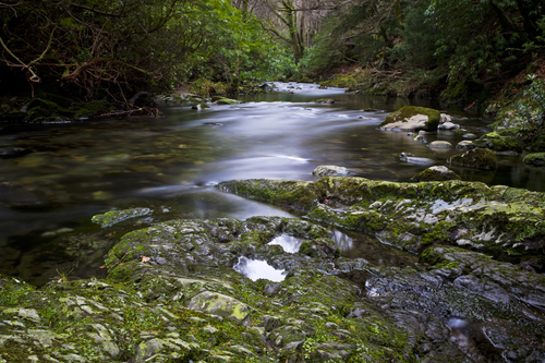 River flowing through Tollymore near Newcastle, Northern Ireland.