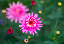 Mini_140626-132235-pink_star_