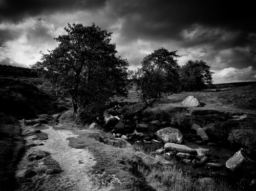 On the edges of Yarncliffe Wood in the Longshaw Estate