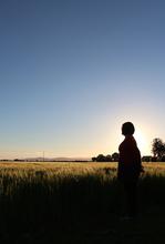 Mini_140714-011935-grass_field_sunset_silhouette_