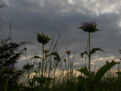 Wild Flowers Before Sunset