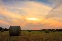 rolling the hay at sunset at phoenix park