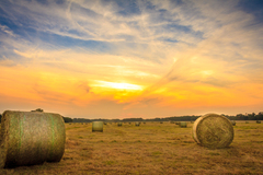 Sunset And Hay Bales at Phoenix Park.