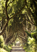 Mini_140805-091622-dark_hedges