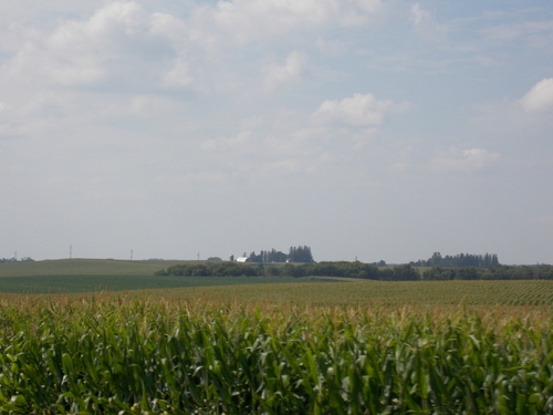 Corn fields & farm on the rolling farmland of southern Minnesota