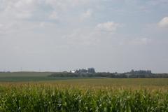 Corn fields & farm on the rolling farmland of southern Minnesota