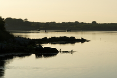 Two herons at dawn, near Dhún Guaire Castle, Kinvara, Co Galway
