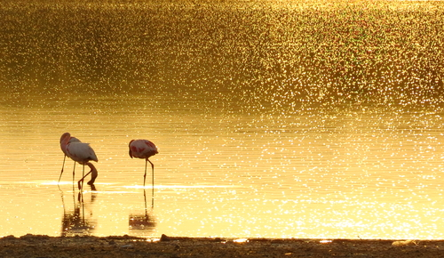 Sunrise with Flamingos at Lake Magadi Kenya