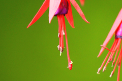 """Macro.   Know anyone who may be interested in a beautiful photographic print ? Please share this link with them. Thanks !"""""""