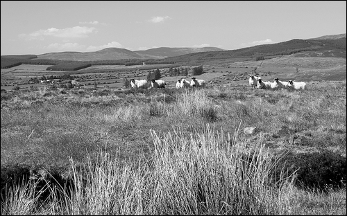 Comeraghs mountain range County Waterford.