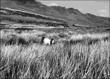 """Comeraghs mountain range County Waterford.  Know anyone who may be interested in a beautiful photographic print ? Please share this link with them. Thanks !"""""""