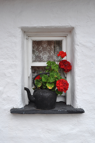 Old kettle with flowers on Irish cottage window
