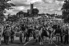 Mini_141027-012321-ballinasloe_horse_fair_mono