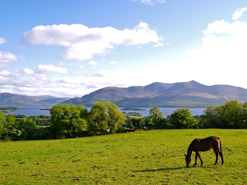 A lone horse grazes on the meadows of Aghadoe Hill in the late afternoon sunshine overlooking Lake Killarney and the mountains of Killarney National Park, County Kerry.