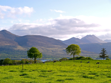 Cattle grazing the lush springtime pastures of Aghadoe Hill with the mountains of Killarney National Park beyond in County Kerry, Ireland.