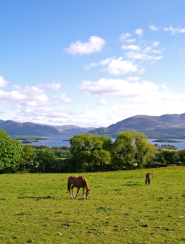 Early evening view of horses grazing the lush green pastures of Aghadoe Hill in springtime overlooking Lake Killarney and the mountains of Killarney National Park beyond in County Kerry, Ireland.