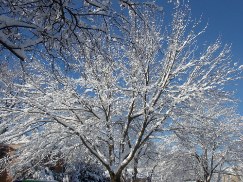 Brilliant snow in the sun on trees in Des Moines, Iowa.