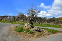 This is an old Mass bush at Barabehy, Mooncoin in Co. Kilkenny. The sacrifice of the mass was offered up here during The Penal days, when catholics were not allowed to practice their religion.