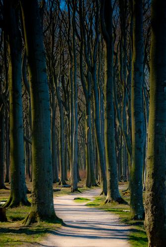Ghostwood, Nienhagen, Germany