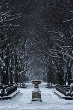 A snowy, February morning in Central Park, New York, USA.