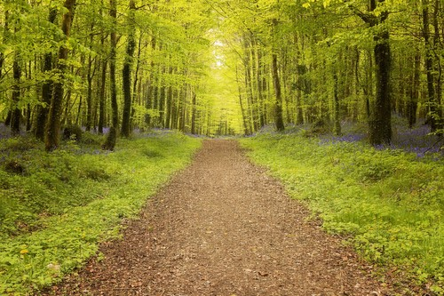Forest Park Boyle.
