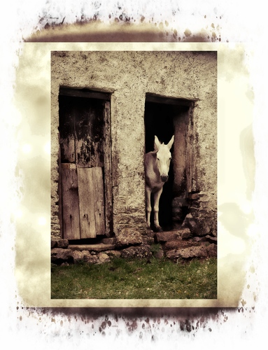 An old mule standing in the doorway of an old house.