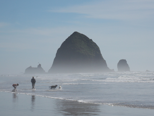 Two dogs play in the ocean surf on Cannon Beach.
