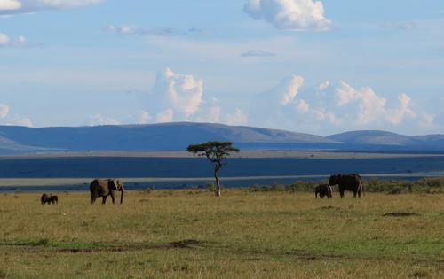 Early morning Masai Mara