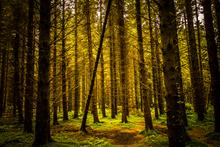 Parkanaur Forest Park, Dungannon