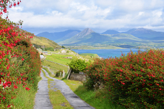 A view back to Diamond Hill and Connemara National Park taken from a small road over looking Ballinakill harbour on the side of Tully Mountain
