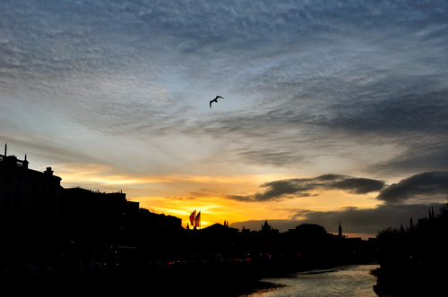 Dublin's Herring Gulls circle over the River Liffey as the sun sets behind Temple Bar, seen from O'Connell Bridge.