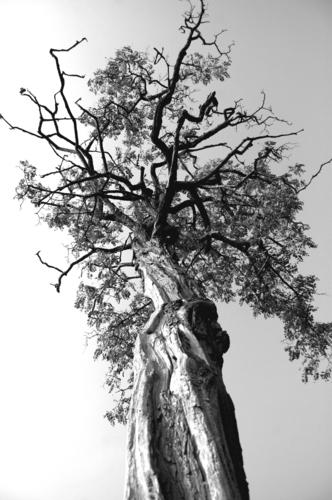 Tree in Herbert Park