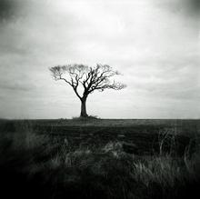 Mini_120202-123216-lone_tree