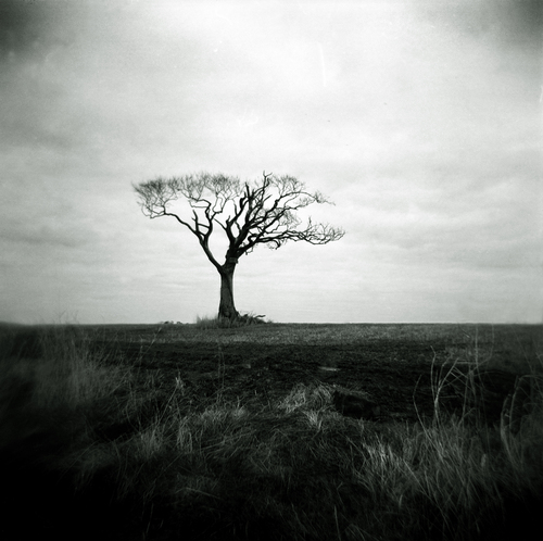 Solitary tree in a barren field