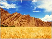 Mini_120207-203647-harvest