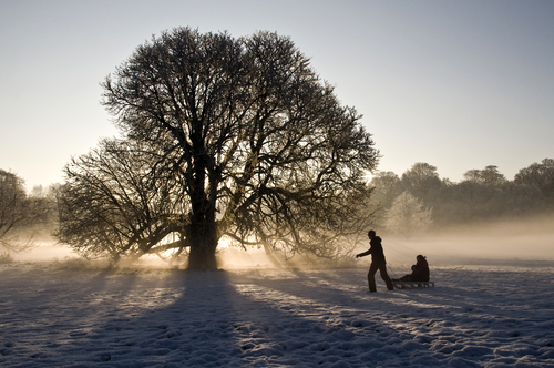 A winter scene in Lough Key Forest Park, Boyle. 
